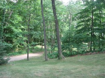 Driveway/Woods Before